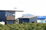 みかん畑を借景する家のイメージ2